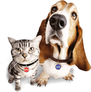 dog_cat animal tags